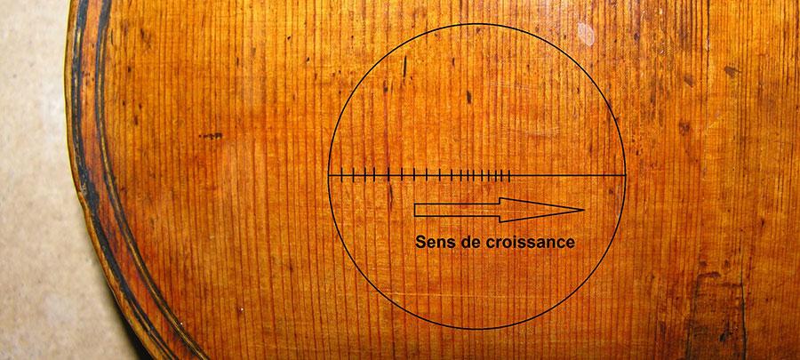 violon dendrochronologie